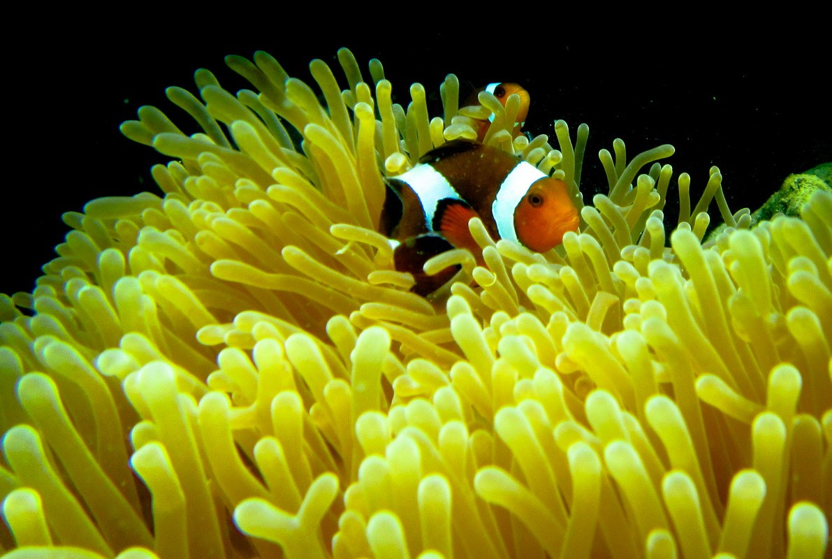 coralinseabeuty