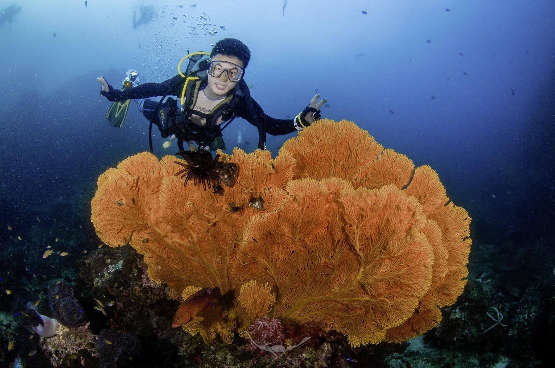 coralsmast
